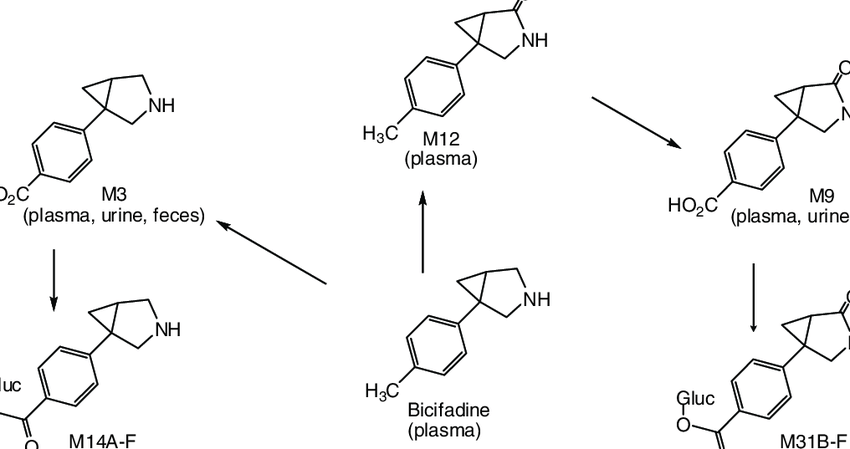 Proposed metabolic scheme of bicifadine in adult male