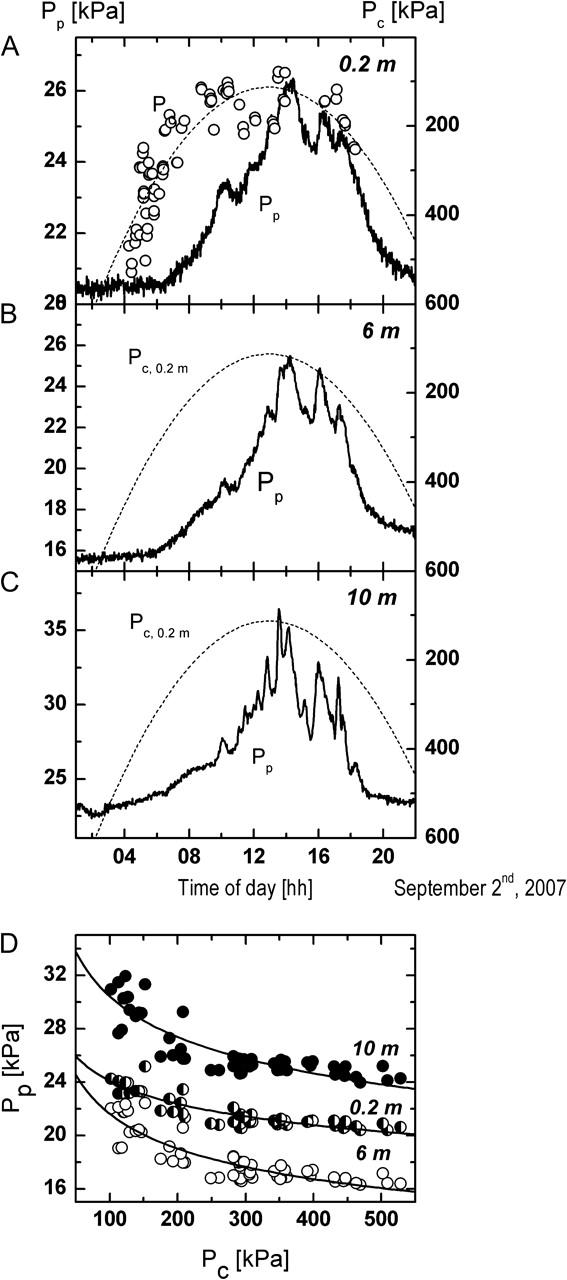Diurnal recordings of cell turgor pressure, Pc, at 0.2 m