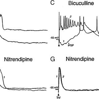 (PDF) L-Type Calcium Channel-Mediated Plateau Potentials