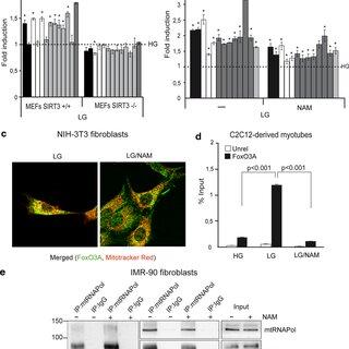 (PDF) A novel AMPK-dependent FoxO3A-SIRT3