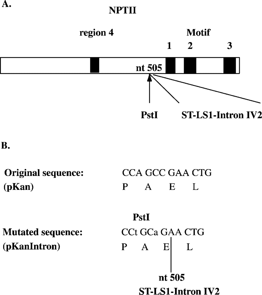hight resolution of a schematic drawing of the nptii gene the positions of the conserved download scientific diagram