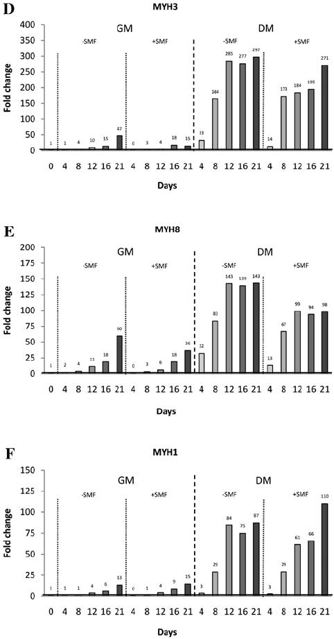 Gene expression analyses (qRT-PCR) of (A) MYF5, (B) MYOD1