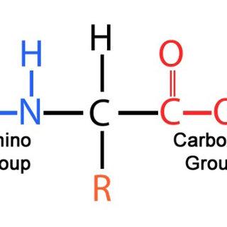 Amino acids general formula | Download Scientific Diagram