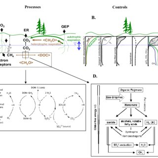 (PDF) Peatlands and the carbon cycle: From local processes