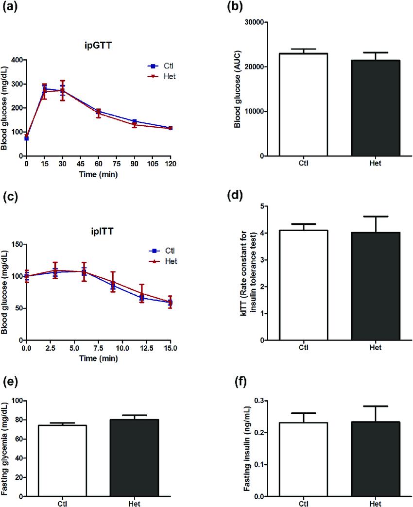 Glucose homeostasis of ARHGAP21 Het mice. Changes in blood