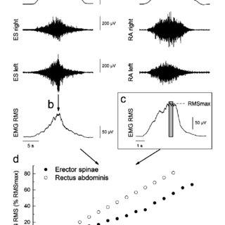 (PDF) Validity of trunk extensor and flexor torque