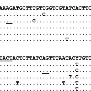 Metaphase plates (A-B) and karyotypes (A'-B') of