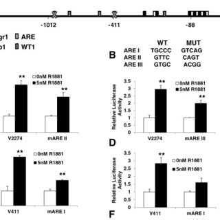 Androgen regulates VEGF expression in LNCaP and 22Rv1