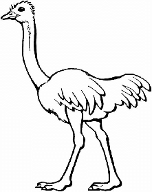 The height of the ostrich is twice the height of the