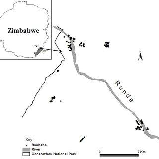 (PDF) Impact of African elephants on baobab (Adansonia
