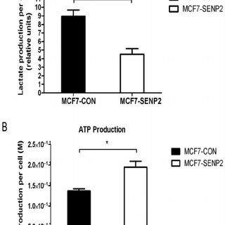 Knockout of SENP2 leads to increased aerobic glycolysis in