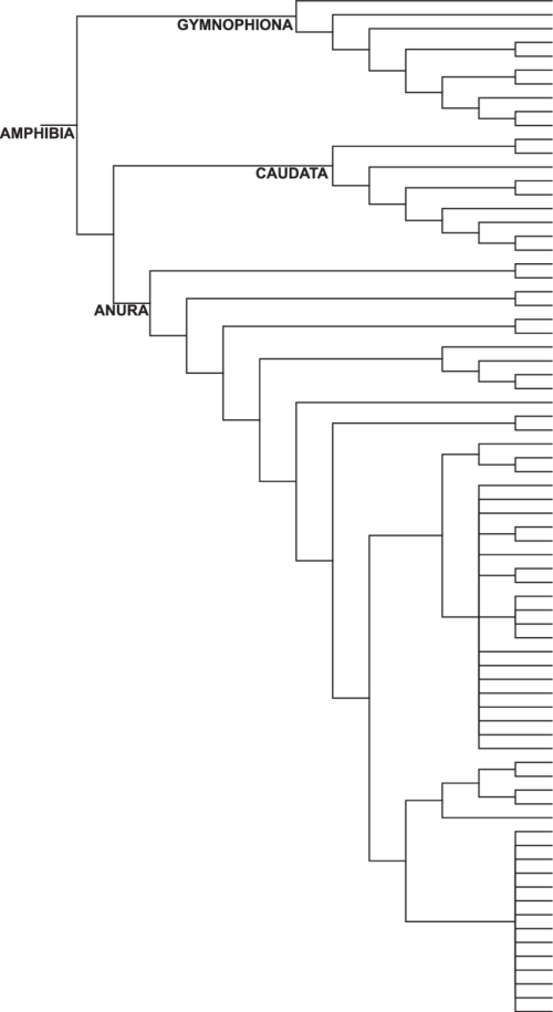small resolution of  phylogeny of amphibian families frost 2014 highlighting those with salt tolerant representatives