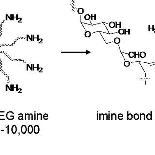 Foundation chemistry for polysaccharide-based tissue