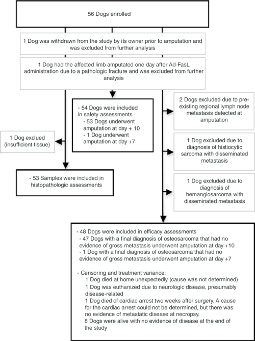 small resolution of flow chart provides details on dogs enrolled in the study and exclusions from each of the three measured endpoints two dogs were excluded from all the