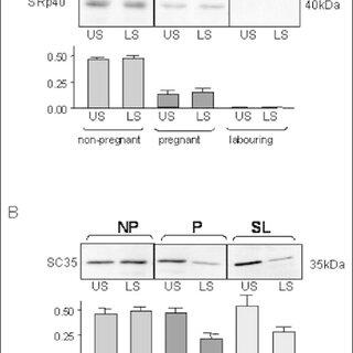(PDF) The Switch in Alternative Splicing of Cyclic AMP