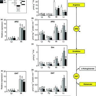 (PDF) Grassland species differentially regulate proline