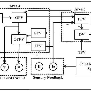 Model Predictive Control (MPC) based closed-loop BMI for