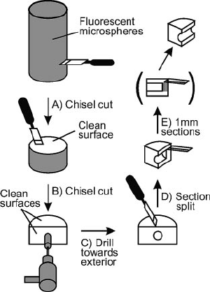 Schematic diagram of sample processing for fluorescent