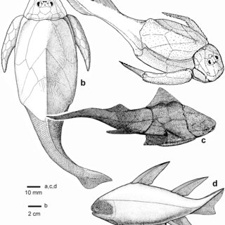 Reconstructions of extinct jawed vertebrate groups