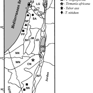 Tuber asa Tulasne & C. Tulasne (HAI-D-033): A, Cross