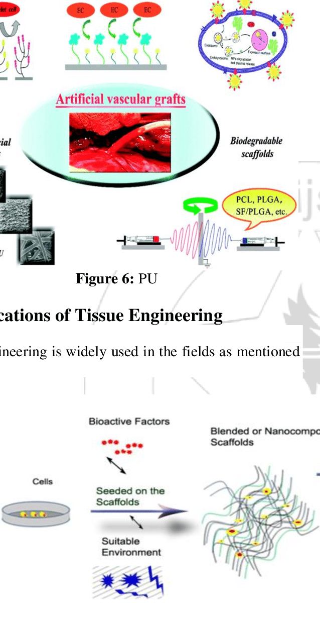 medium resolution of bone tissue engineering 4 2 cartilage tissue engineering pcl based nanofibrous scaffolds by electrospinning are the most