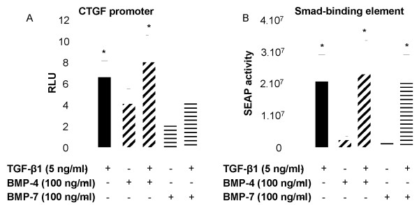 TGF-β1-induced CTGF promoter and SBE-SEAP reporter