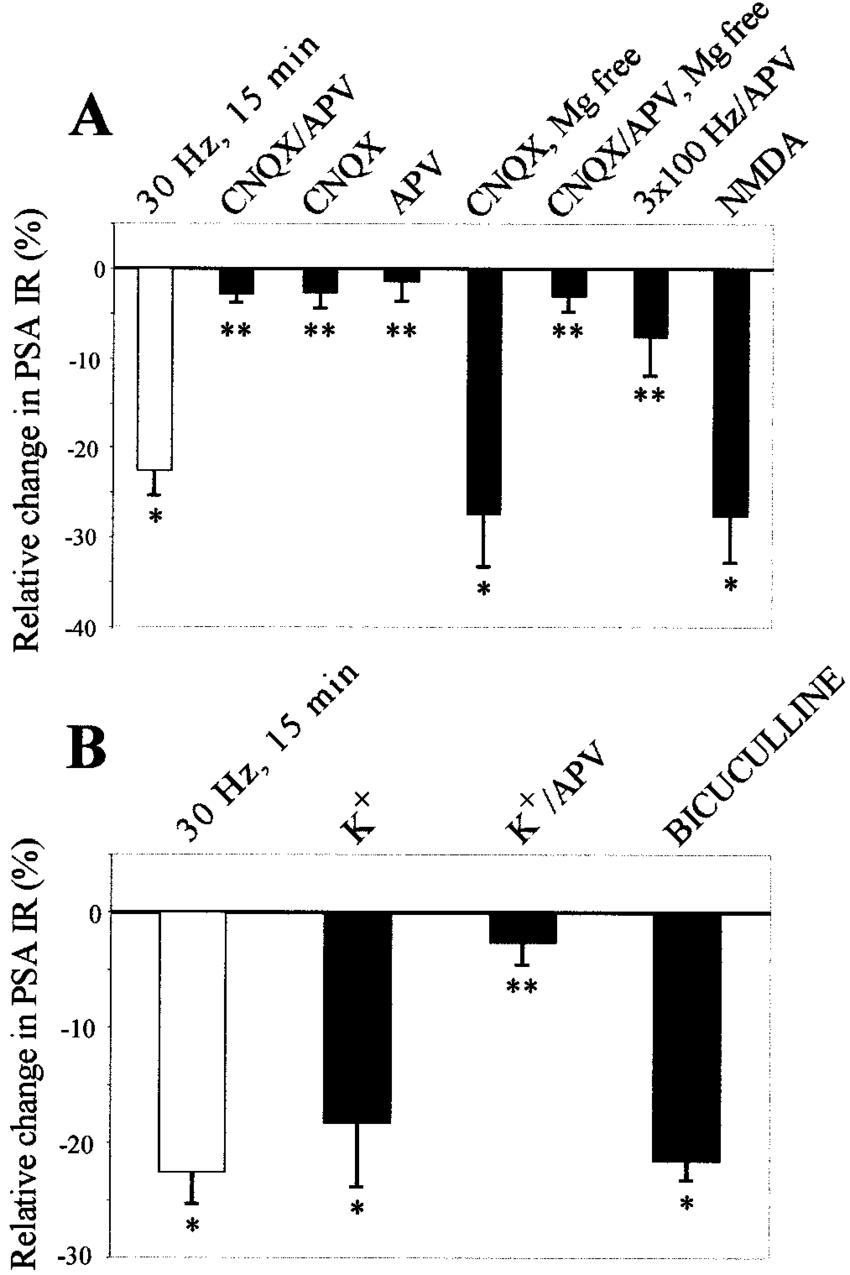 Regulation of PSA expression requires NMDA receptors. A
