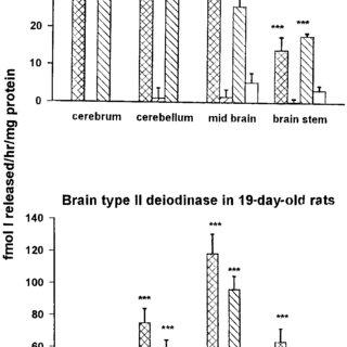 (PDF) Selenium and iodine deficiencies: effects on brain