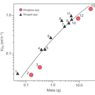 (PDF) Non-linear scaling of oxygen consumption and heart