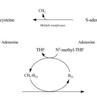 (PDF) Nutritional composition of ulluco (Ullucus tuberosus