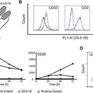 (PDF) Dual-targeting triplebody 33-3-19 mediates selective