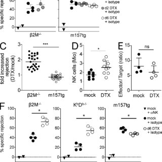 Self-reactive NK cells remain tolerant in the absence of T