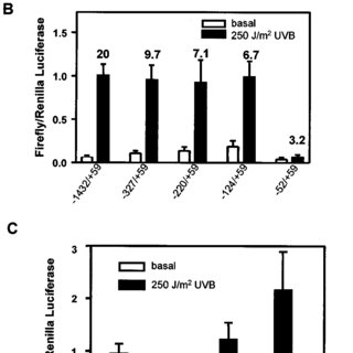 Suppression of CREB, but not NF-kB activity, inhibits UVB
