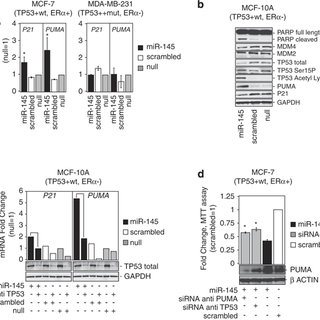 R-145 represses ER-α protein in MCF-7 by direct binding