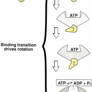 Extending the binding-change mechanism in the hydrolysis