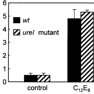 Effect of detergent permeabilization on the urease