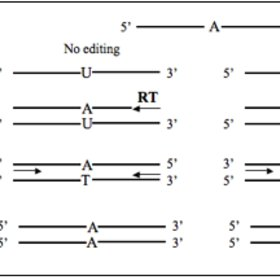 Schematic diagram for the detection of RNA modification by