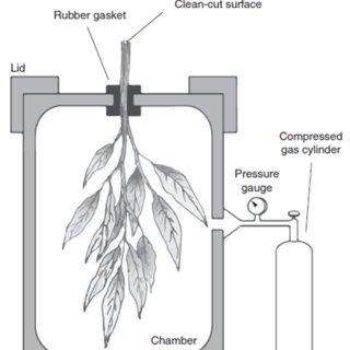 (PDF) New handbook for standardise measurement of plant