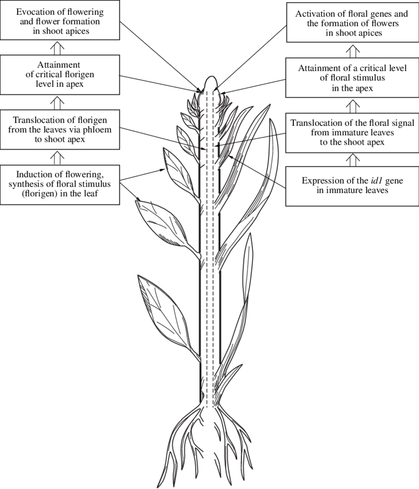 Schematic representation of the main postulates of