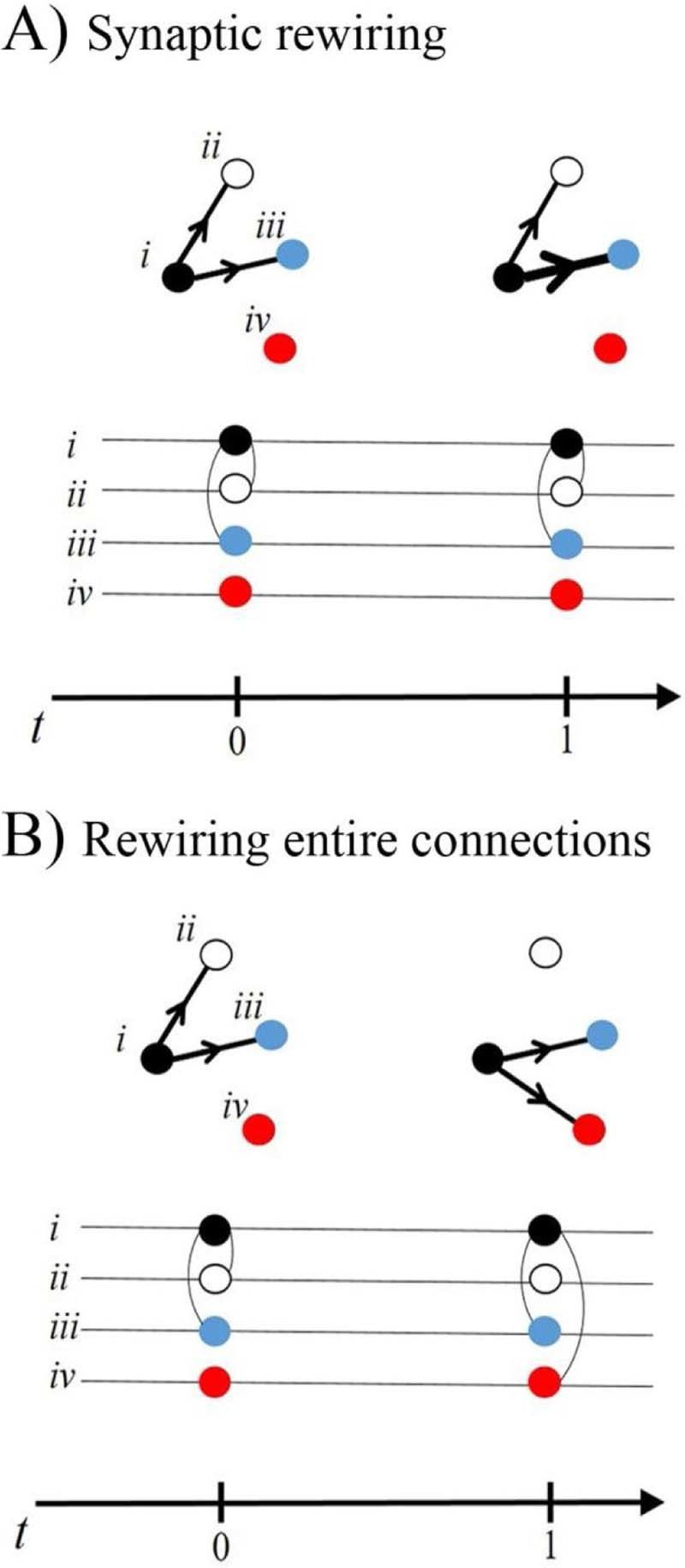 hight resolution of each neuron is depicted as a node in a network diagram