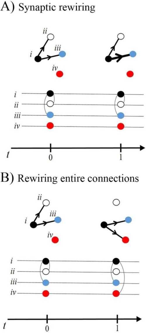 small resolution of each neuron is depicted as a node in a network diagram