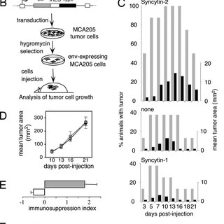 (PDF) Placental syncytins: Genetic disjunction between the