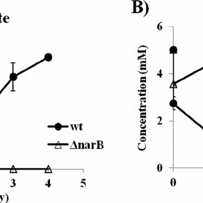 (PDF) Inactivation of nitrate reductase alters metabolic