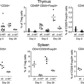 (PDF) c-Rel is required for the development of thymic