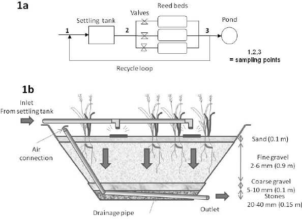 (a) Schematic of the settling tank and reed bed wastewater
