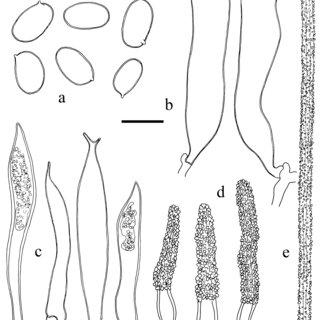 12 Large-scale Agaricomycetes phylogeny based on analysis