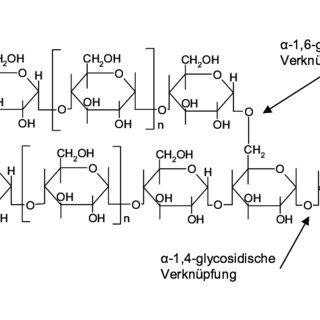 (PDF) Charakterisierung des Glycogen- und