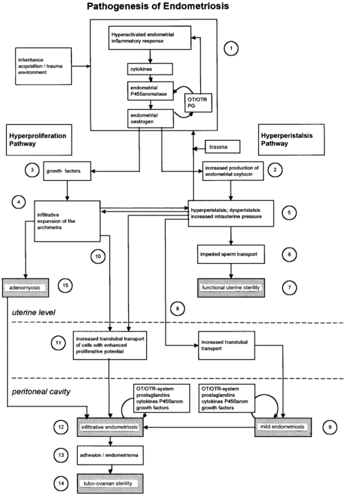 small resolution of a schematic representation of the pathophysiology of endometriosis