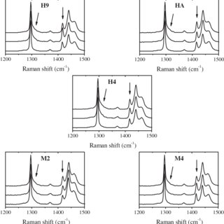 DSC melting endotherms of the investigated PE grades (M2