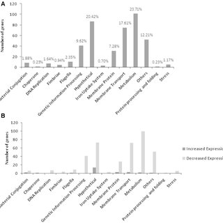 Invasion assay in CEC-32. Comparison of strains after 1 h